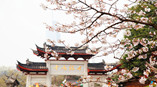 Spring-Flowers-Add-Beauty-to-Landmarks-All-over-China