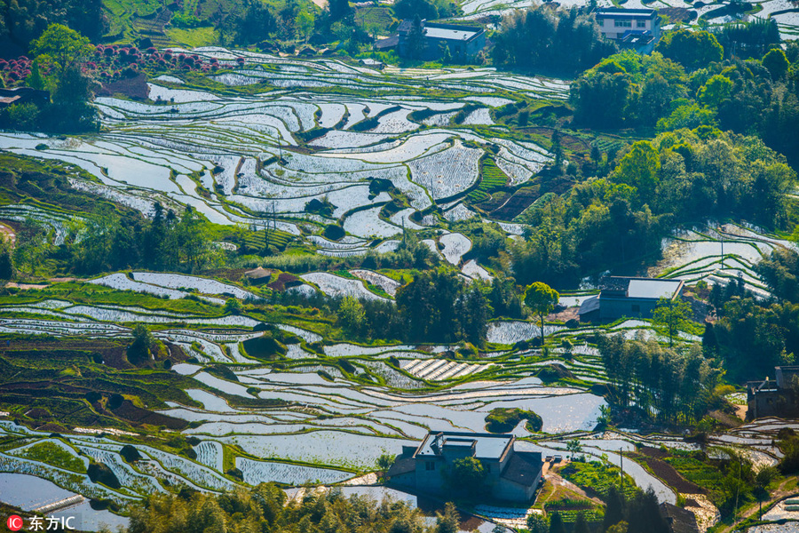 Aerial-Photos-Show-Landscape-of-Terraced-Fields-In-SW-China-1