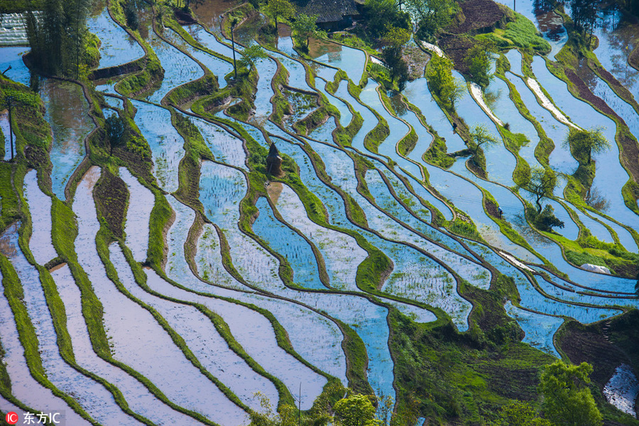 Aerial-Photos-Show-Landscape-of-Terraced-Fields-In-SW-China-4