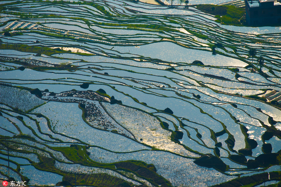Aerial-Photos-Show-Landscape-of-Terraced-Fields-In-SW-China-5