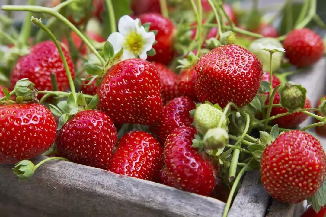Go-Pick-Strawberry-at-the-Farm-Sweet-April-3