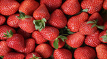 Go-Pick-Strawberry-at-the-Farm-Sweet-April