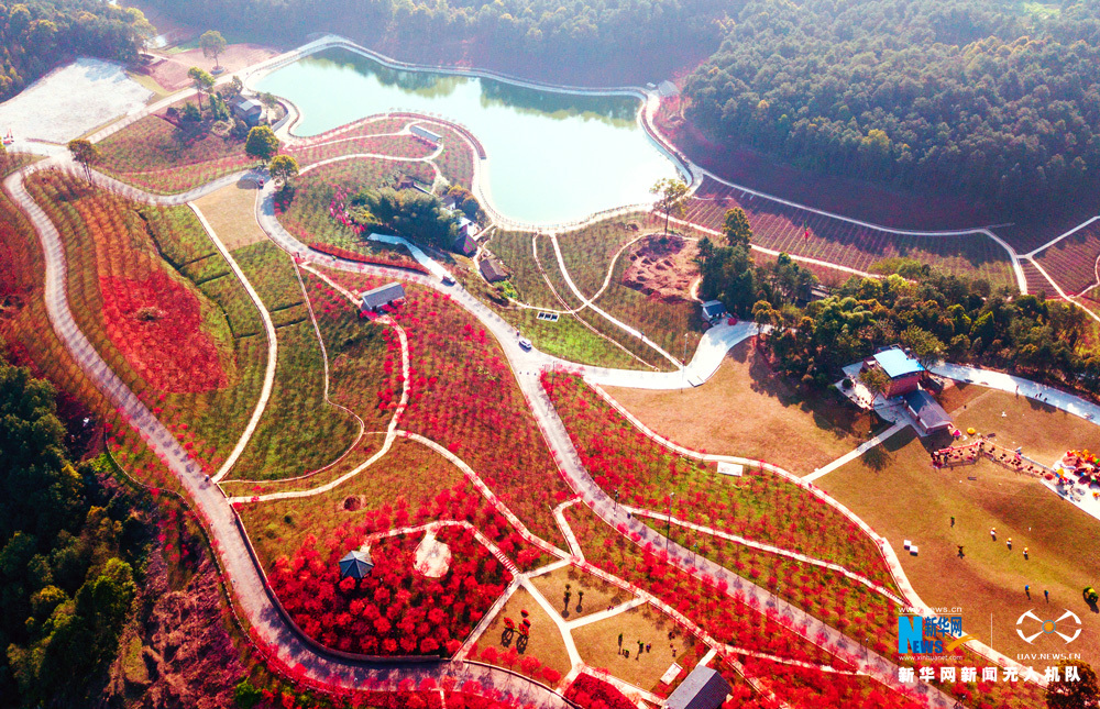 The-Most-'RED'-Spring-View-in-Chongqing-5