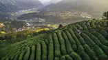 Two-Thousand-Mu-of-Tea-Garden-In-Wulong