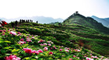 Enjoy-A-Wonderful-Spring-Tour-In-Dianjiang