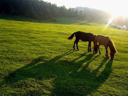 the-popular-horse-riding-places-in-chongqing-2