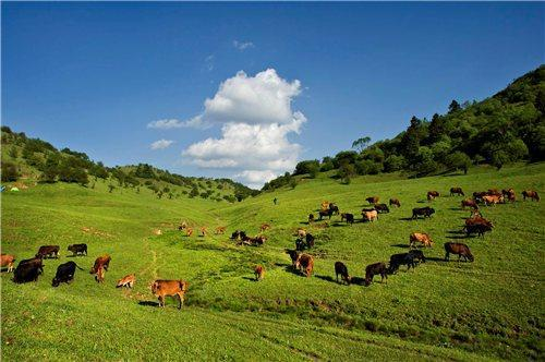 the-popular-horse-riding-places-in-chongqing-6