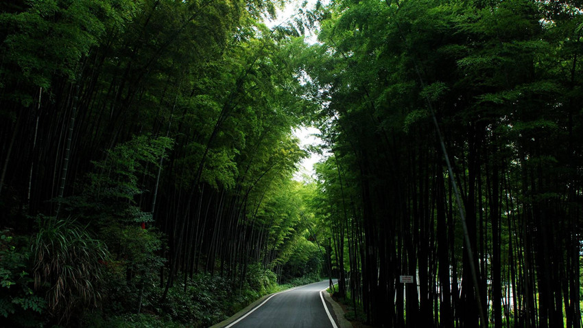 walking-in-the-tea-mountain-and-bamboo-forest-7