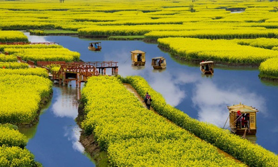 Need-to-know for Viewing Flowers In Guangyang Island-1