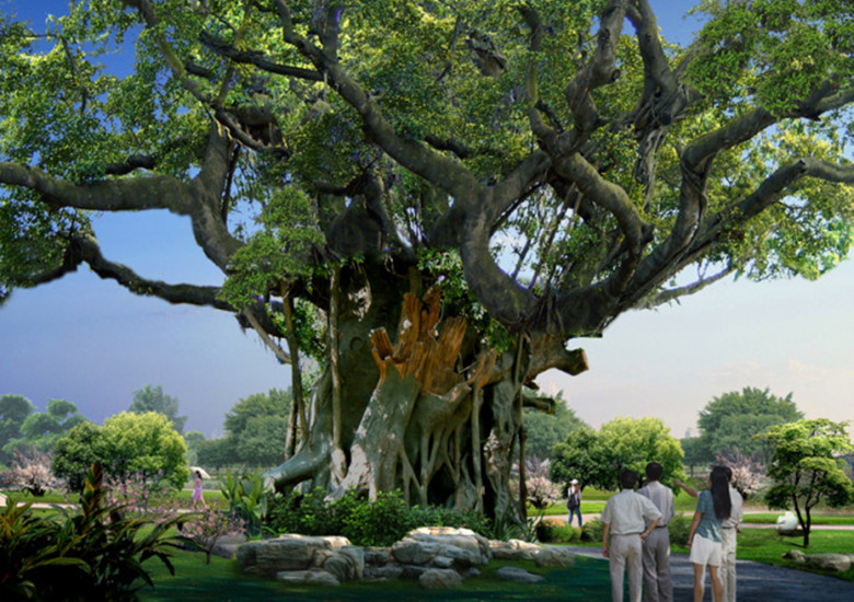 Ancient Trees Are Something We Must Protect-2